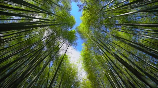vídeos de stock, filmes e b-roll de floresta de bambu de arashiyama, kyoto japão - alto descrição geral