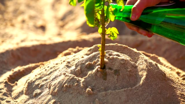 Arbor Day in sand. Close up