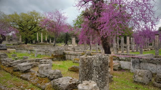 archaeological site of ancient olympia , ruins of palaestra at olympia and judas tree ( cercis siliquastrum ), peloponnes, greece - пелопоннес стоковые видео и кадры b-roll