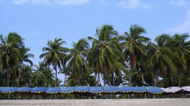 area rest beach sand with umbrella and coconut tree background.