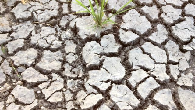 Arid area. Planted areas that lack water.