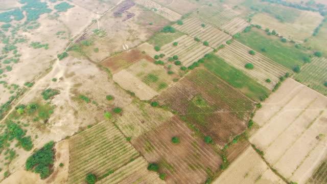 Ariel view of fields, Bagan video