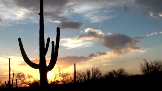 Arizona Saguaro Sunset Time Lapse video