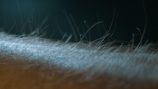 arm hair rising, emotional feeling 4k - włosy filmów i materiałów b-roll