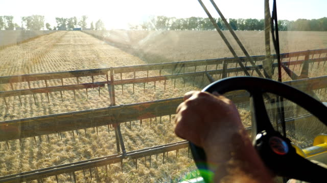 arm of farmer holding steering wheel and controlling combine during harvest. man working in field on his grain harvester. view on scenic landscape and process of gathering barley from inside cabin. - trattore video stock e b–roll