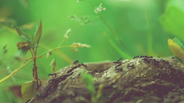 armee ameisen entlang schöner baum stub, niedrigen perspektive - ameisenbär stock-videos und b-roll-filmmaterial