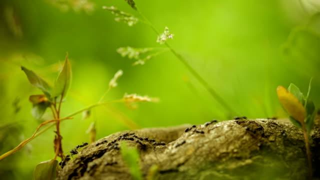 armee ameisen entlang schöner baum stub - ameisenbär stock-videos und b-roll-filmmaterial