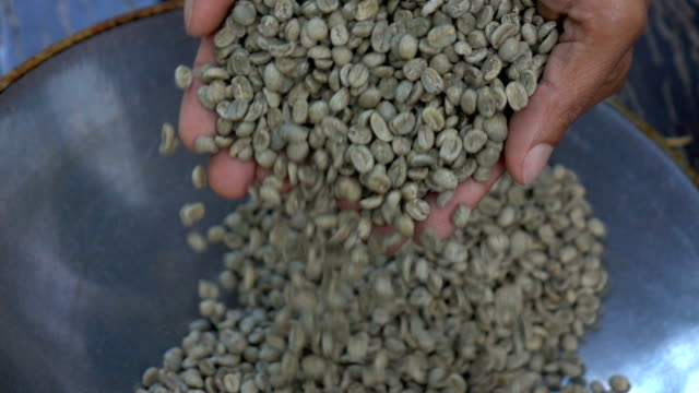 vídeos de stock e filmes b-roll de aromatic roasted coffee beans,hands testing quality in slow motion - origens