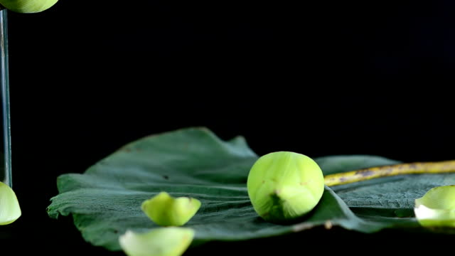 arrange lotuses on their leaf for respecting Buddha religion video
