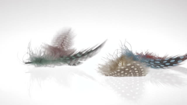 Art Abstract Background Beautiful colorful feathers in reverse slow motion video
