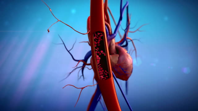artery, heart blood vessels, artery shown with a cut out section, High quality rendering with original textures and global illumination, Contraction of blood vessels on a heart background  blood vessel stock videos & royalty-free footage