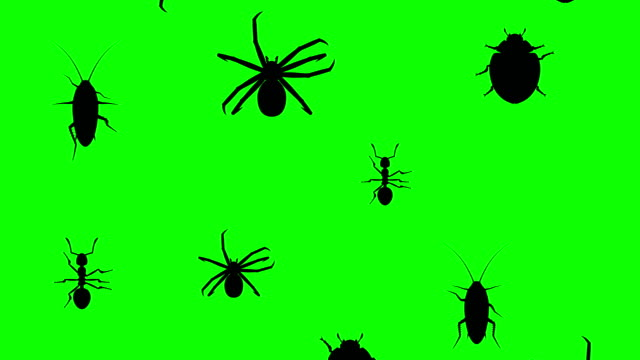 arthropods running up - insetto video stock e b–roll