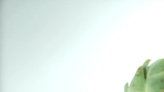 Artichoke Slide By video