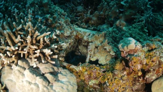 vídeos y material grabado en eventos de stock de arrecife artificial de ruina del hidroavión - sea life park