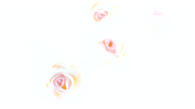 artificial roses bouquet - exposure variation - white roses bildbanksvideor och videomaterial från bakom kulisserna