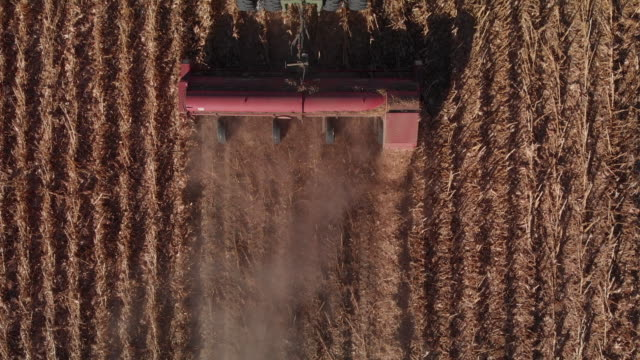 ascending aerial drone shot row header being pulled by a tractor through a field of corn at harvest - agricultural machinery stock videos & royalty-free footage