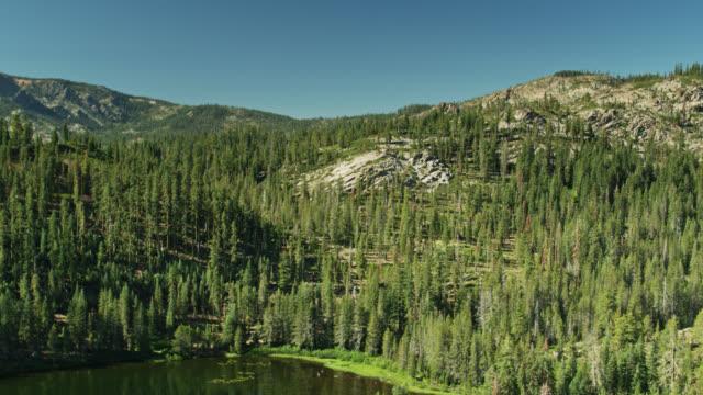 Ascending Drone Shot Over Trees Near Salmon Lake, CA