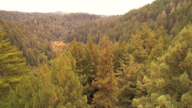 vom boden auf die baumspitze. der wald von sequoias in nordkalifornien, usa westküste - staatspark stock-videos und b-roll-filmmaterial