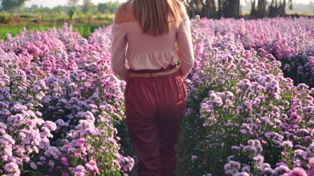 slo mo asian beautiful woman wearing hats and she walking in field of the purple margaret garden. in the morning - gardino video stock e b–roll