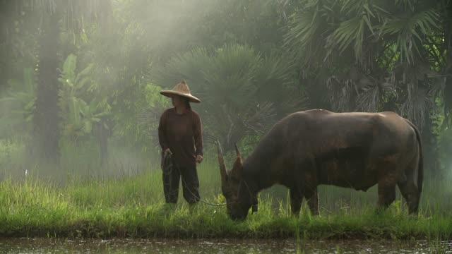 Asian boys having fun playing with his buffalo in the river with splashing water together.(Slow motion)