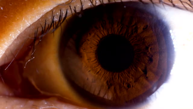 Asian Brown Eye Macro Asian Brown Eye Macro close to stock videos & royalty-free footage