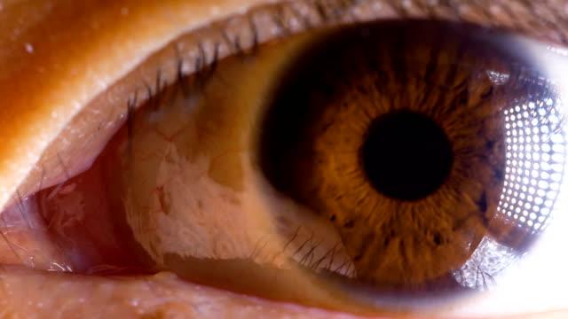 macro occhio marrone asiatico - macrofotografia video stock e b–roll