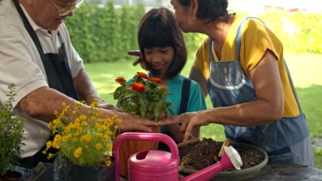 Asian couple senior teach granddaughter to planting flower to pot in home garden.