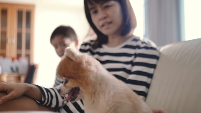 Asian Family Having Fun With Dog At Home video