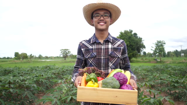 Asian farmer smiling and holding a box of organic vegetables walking at his farm - video