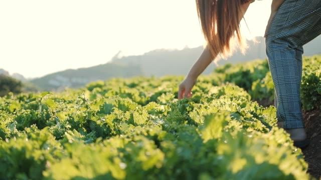 asian farmer woman checking cabbage in cauliflower farm - aktywny tryb życia filmów i materiałów b-roll