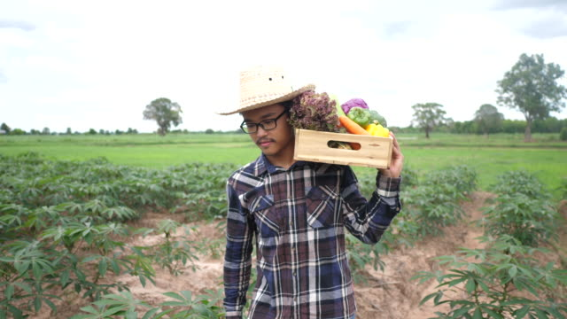 Asian farmers carry various vegetable crates video