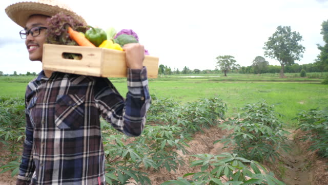 Asian farmers carry vegetable crates after harvesting. - video