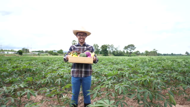 Asian farmers raise vegetable crates after harvesting video