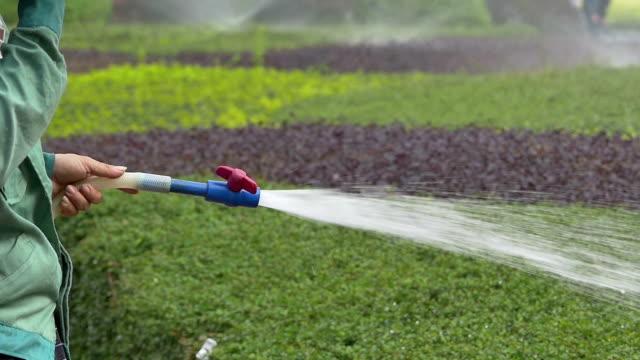 Asian Gardener watering the lawn in park video