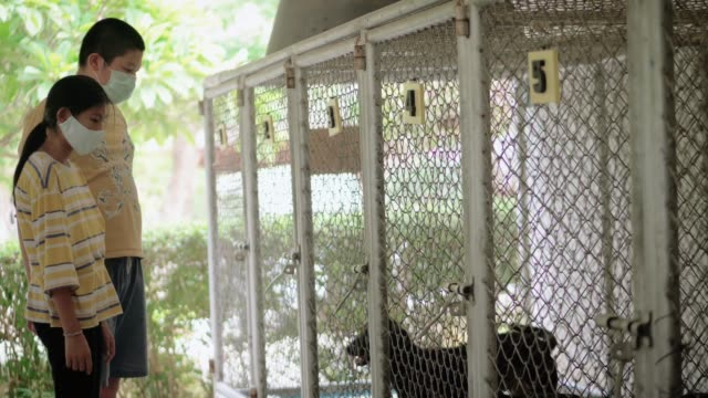 Asian girl and her brother looking homeless dogs in cage, slow motion.