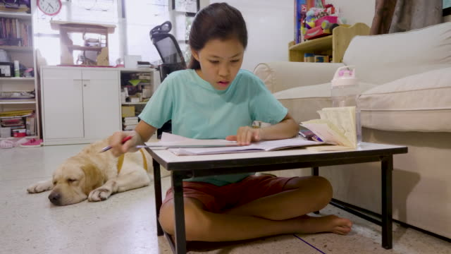 asian girl doing homework or studying and lesson with her pet dog at home, homeschooling and distance learning, education concept - {{asset.href}} video stock e b–roll