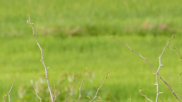 自然の中でアジアゴールデンウィーバー。 - 動物の身体各部点の映像素材/bロール