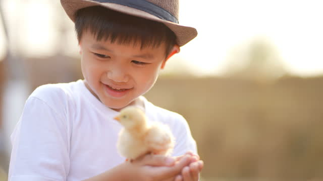 Asian kid play with his pet, chick. Concept of Friendship