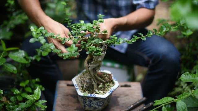 vídeos de stock, filmes e b-roll de homem asiático está cuidando de seu bonsai no jardim. - enfeitado