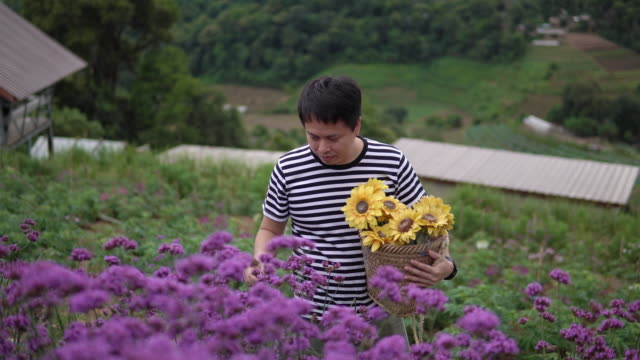Asian man picking Vervain flowers.