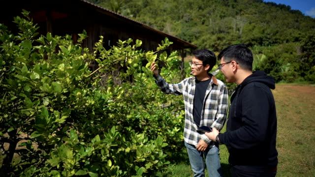slomo - asian man taking photo of lime - gospodarstwo ekologiczne filmów i materiałów b-roll
