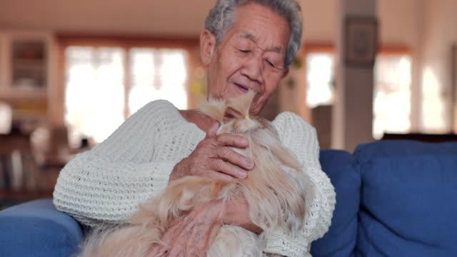 アジアの年配の女性は、ある秋または夏の日に自宅でアームチェアに猫と一緒に休んでいます。ライフスタイル、高齢者、退職、シニアポートレート、ヘルスケアと医学、ライフインスラン� - 老夫婦点の映像素材/bロール