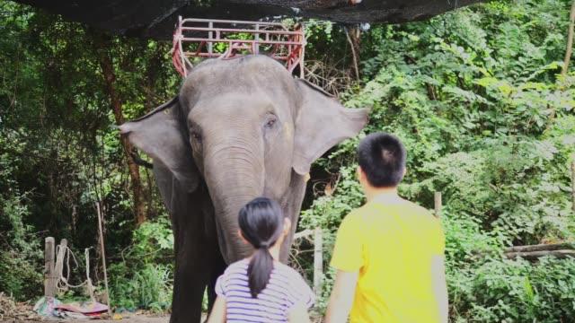 Asian preteen boy and girl feeding banana to big elephant, slow motion.