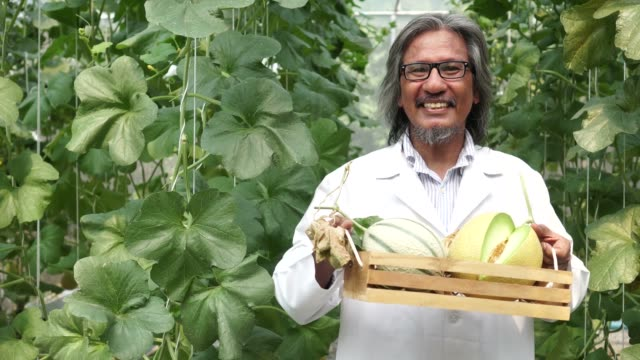 Asian senior agricultural scientist holding a basket of cantaloupe melon and giving it out at melon greenhouse farm