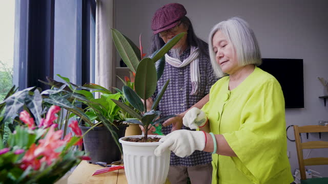 Asian senior couple enjoy takes care indoor plants garden at home