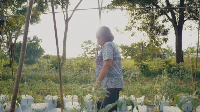 asian senior going on the field for harvesting - gardening video stock e b–roll