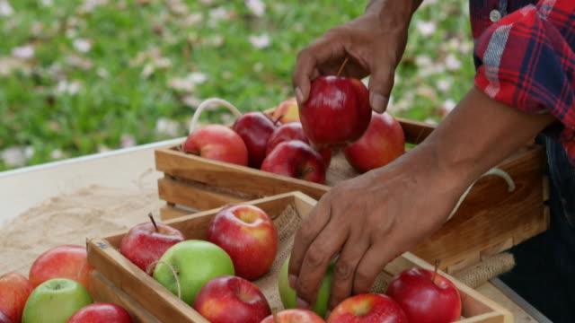 vídeos de stock e filmes b-roll de asian senior man exam apples in farm - 55 59 anos
