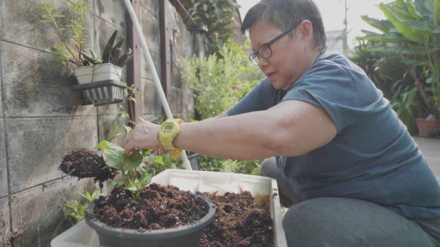 Asian senior woman planting in the garden. Asian senior woman planting in the garden. horticulture stock videos & royalty-free footage