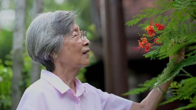 Asian senior woman portrait