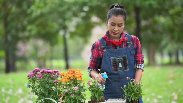 Asian senior woman watering flowers in garden